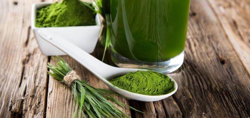người không thể uống trà xanh có thể sử dụng Green Tea Extract